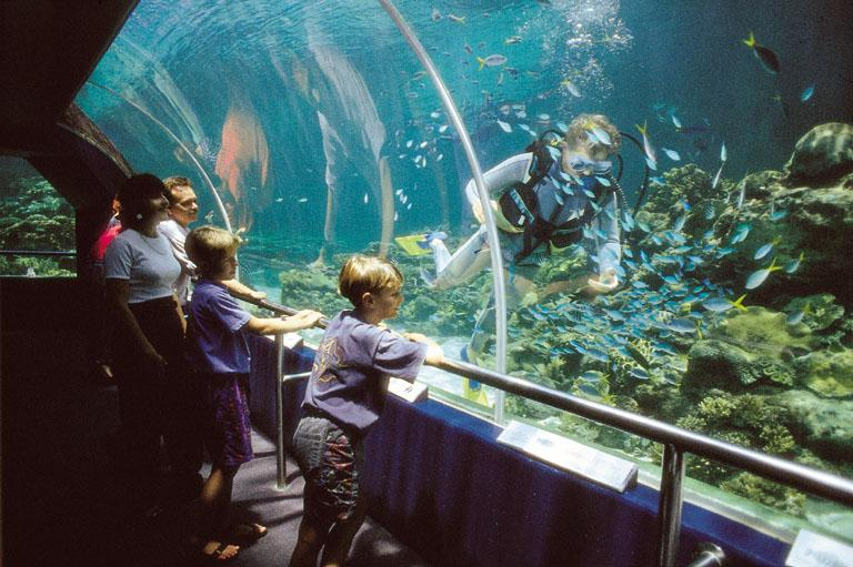 The Top Townsville Attractions Activities